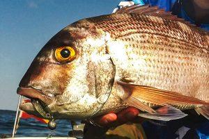 R-SHAD 70 galería capturas roshi fishing