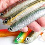 R-SHAD 130 galería producto roshi fishing (1)